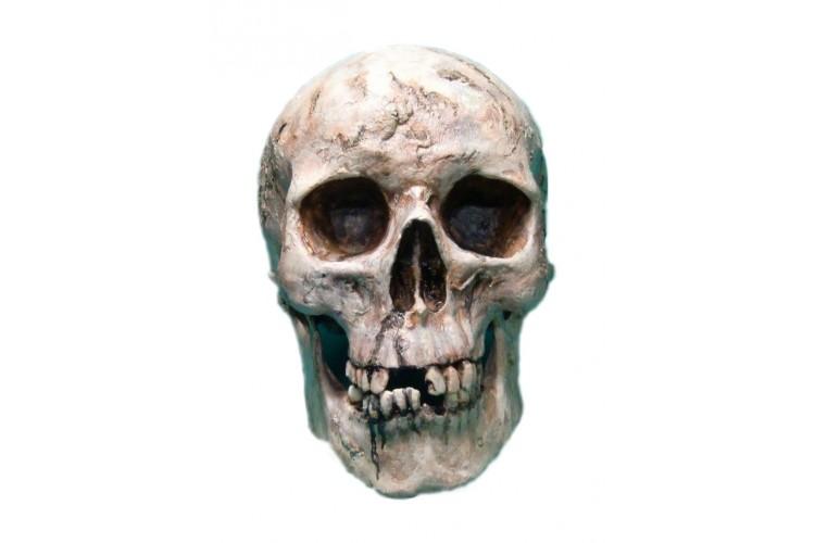 Crâne humain avec mâchoire peint