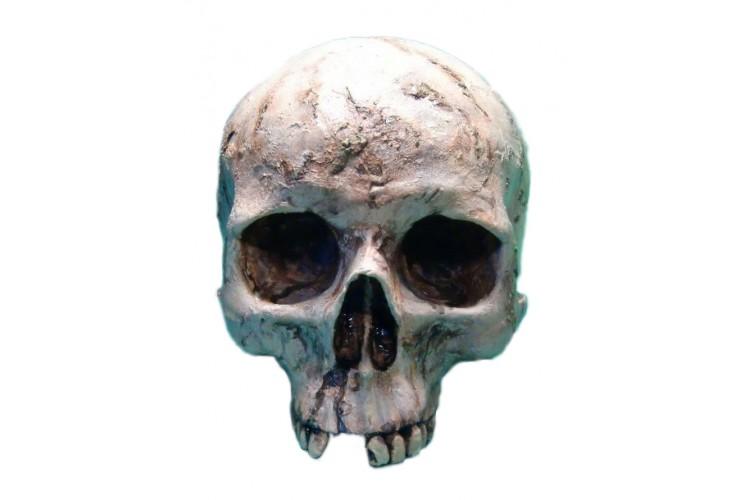 Crâne humain sans mâchoire peint